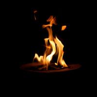 Tanzendes Feuer, 2008